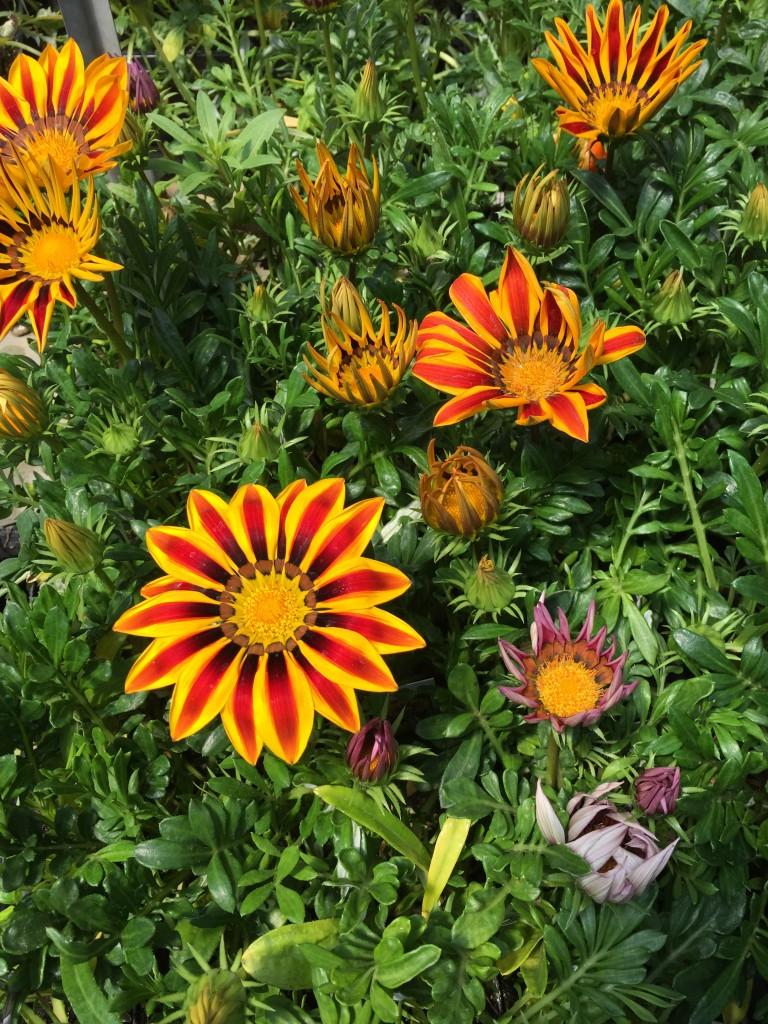 Garden Installations In Mequon And Milwaukee Milwaukee